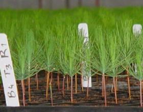 El sector forestal y Trichoderma harzianum